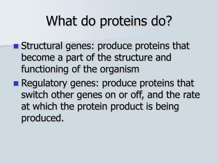 What do proteins do?