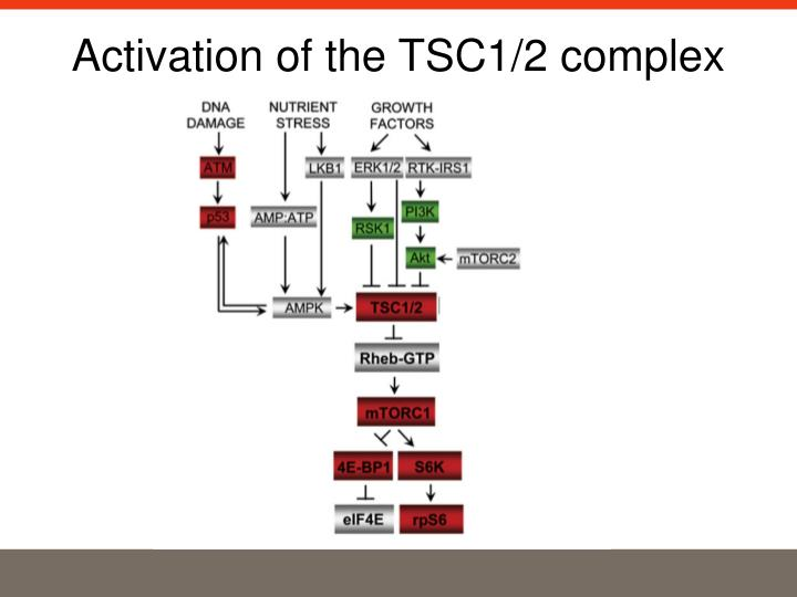 Activation of the TSC1/2 complex