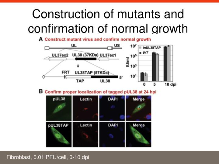 Construction of mutants and confirmation of normal growth