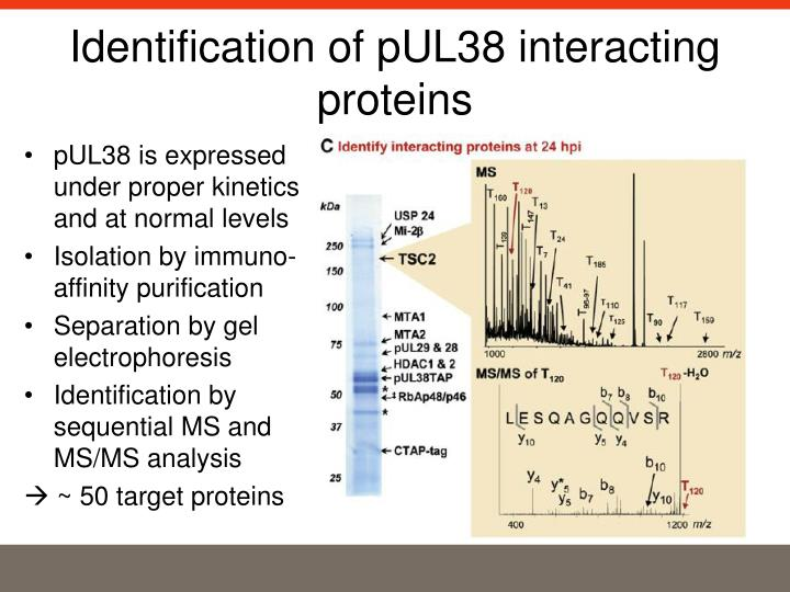 Identification of pUL38 interacting proteins