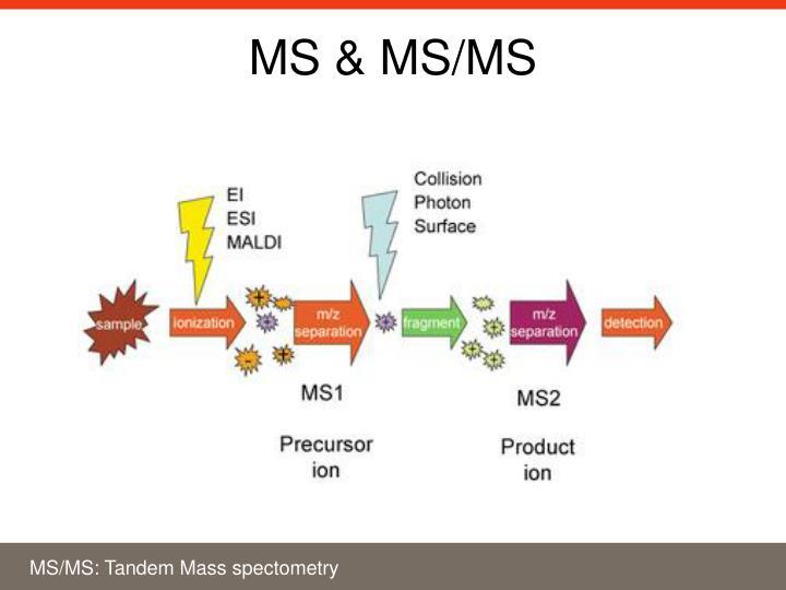 MS & MS/MS