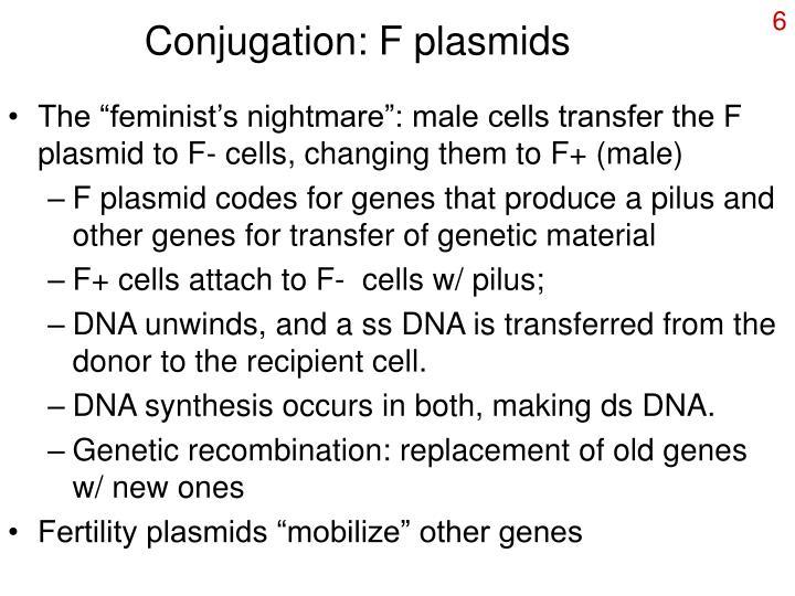 Conjugation: F plasmids