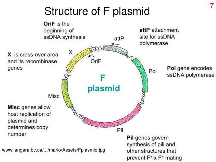 Structure of F plasmid