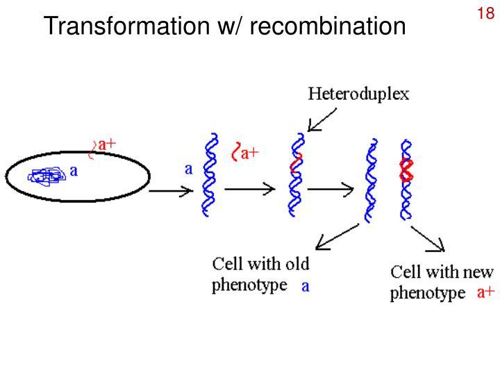 Transformation w/ recombination