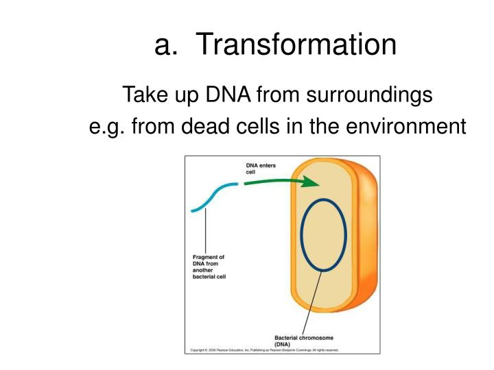 a.  Transformation