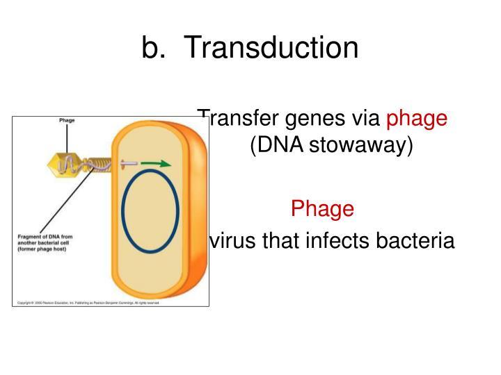 b.  Transduction