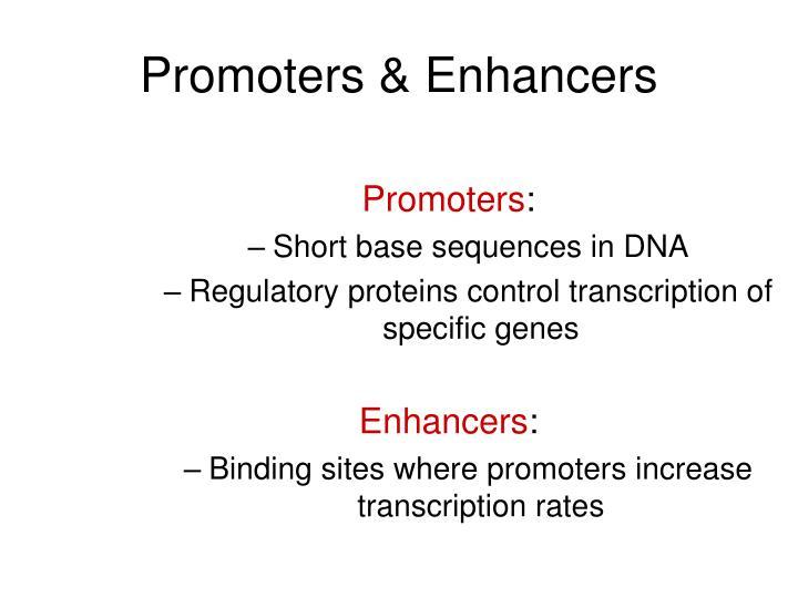 Promoters & Enhancers