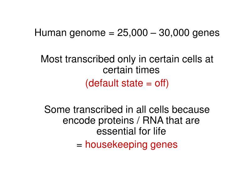 Human genome = 25,000 – 30,000 genes