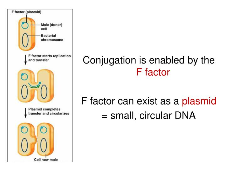 Conjugation is enabled by the