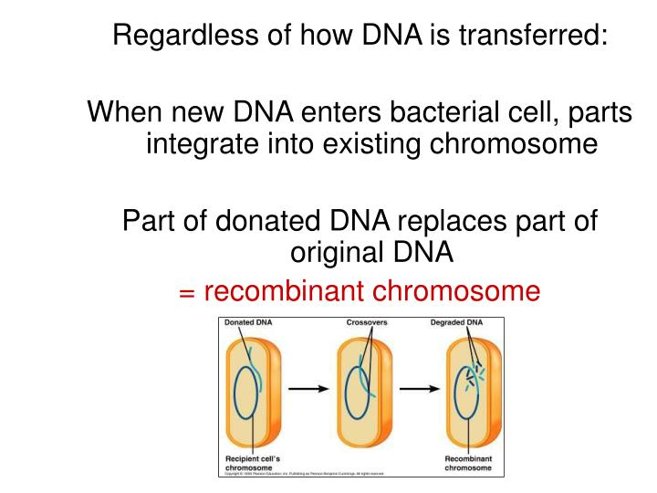Regardless of how DNA is transferred: