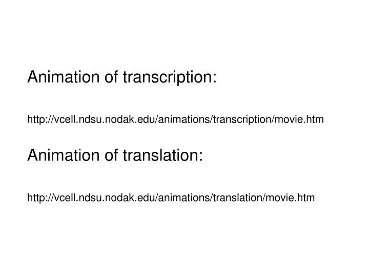 Animation of transcription:
