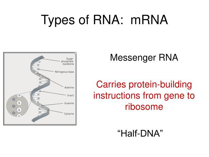 Types of RNA:  mRNA