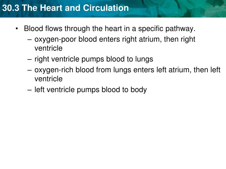 oxygen-poor blood enters right atrium, then right ventricle