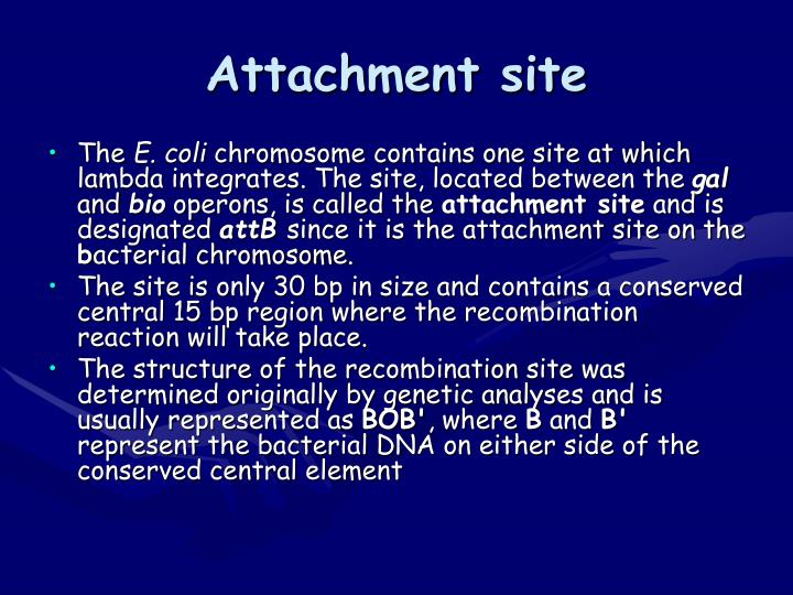 Attachment site