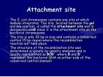 attachment site