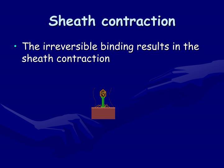 Sheath contraction