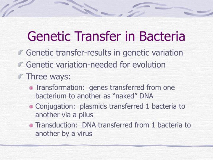 Genetic Transfer in Bacteria
