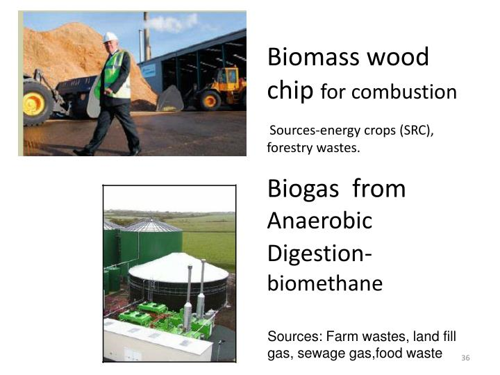 Biomass wood chip