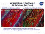 landsat views of healthy and gm defoliated oak forest