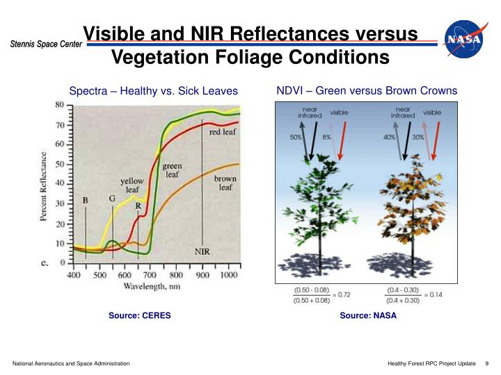 NDVI – Green versus Brown Crowns