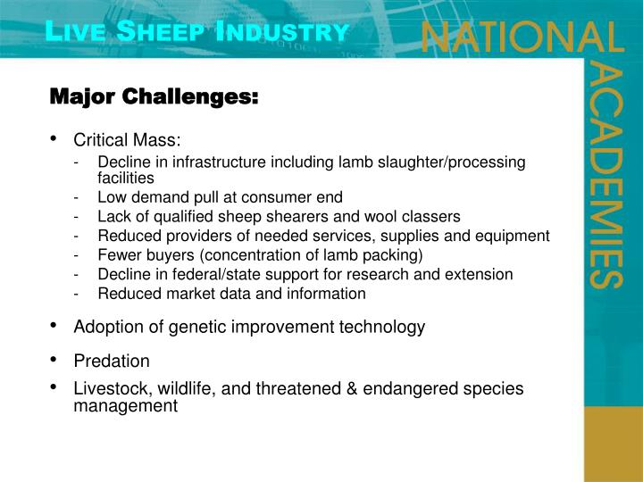 Live Sheep Industry