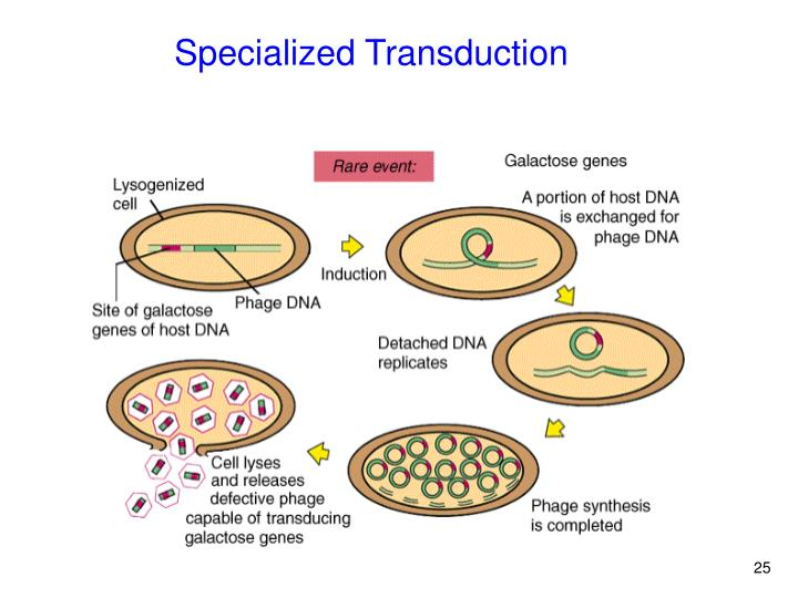 Specialized Transduction