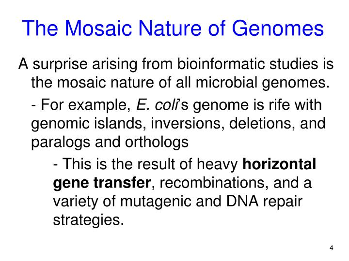 The Mosaic Nature of Genomes