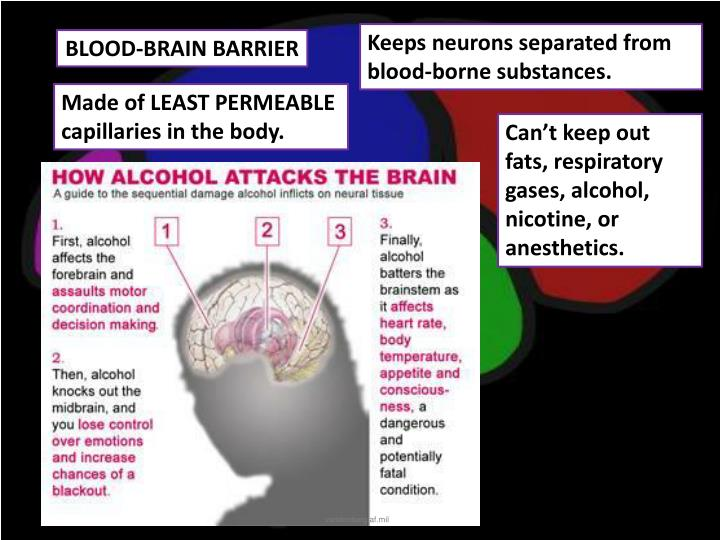 Keeps neurons separated from blood-borne substances.