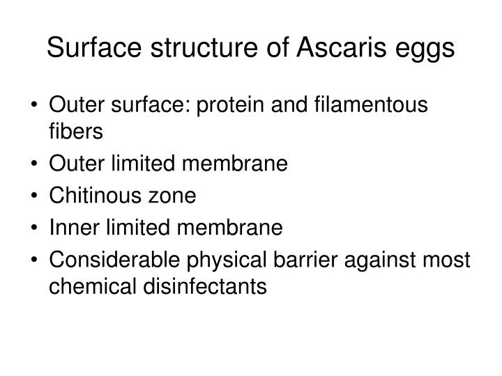 Surface structure of Ascaris eggs