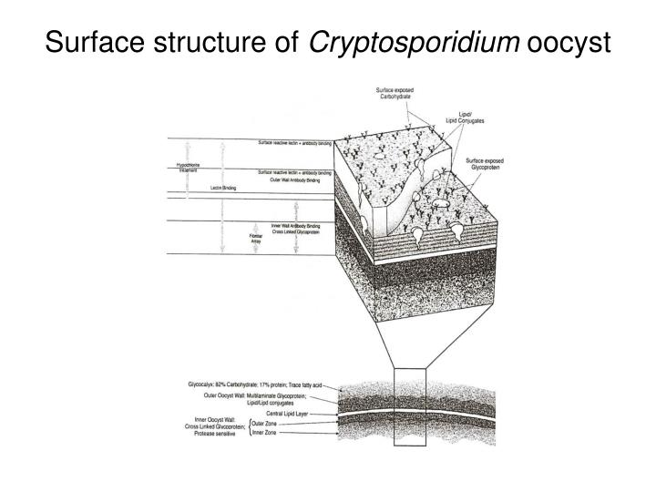 Surface structure of
