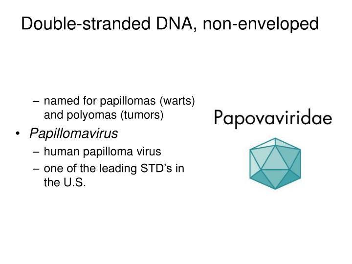 Double-stranded DNA, non-enveloped