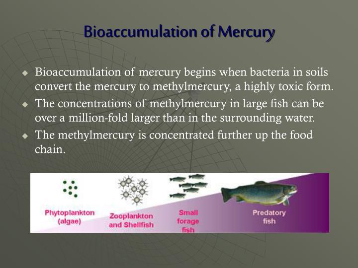Bioaccumulation of Mercury