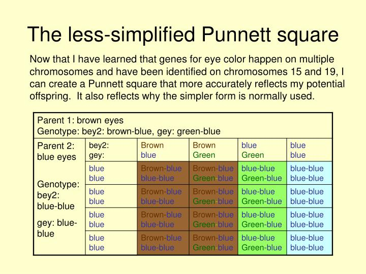The less-simplified Punnett square