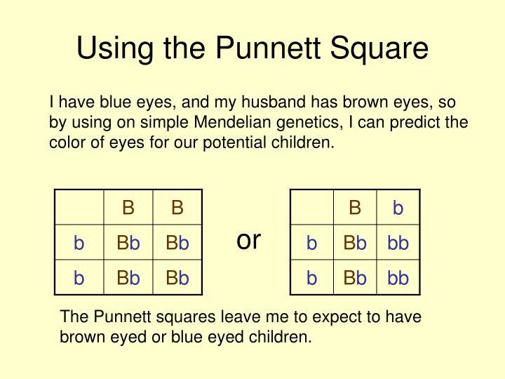Using the Punnett Square