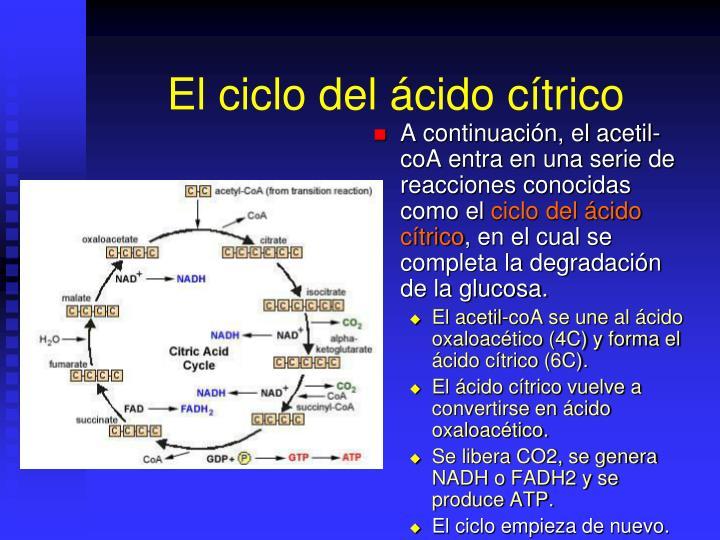 El ciclo del ácido cítrico