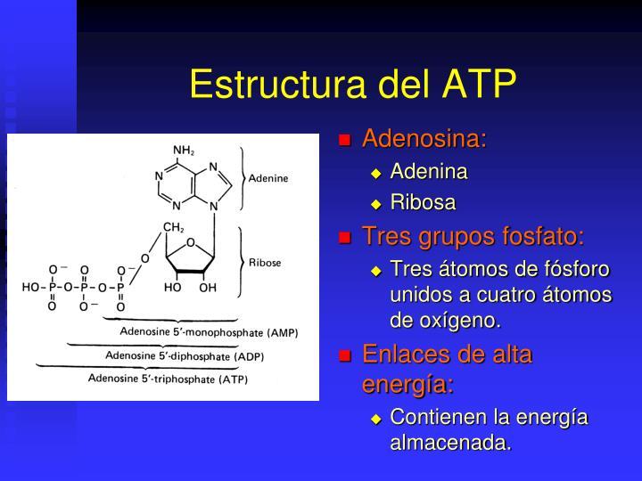 Estructura del ATP