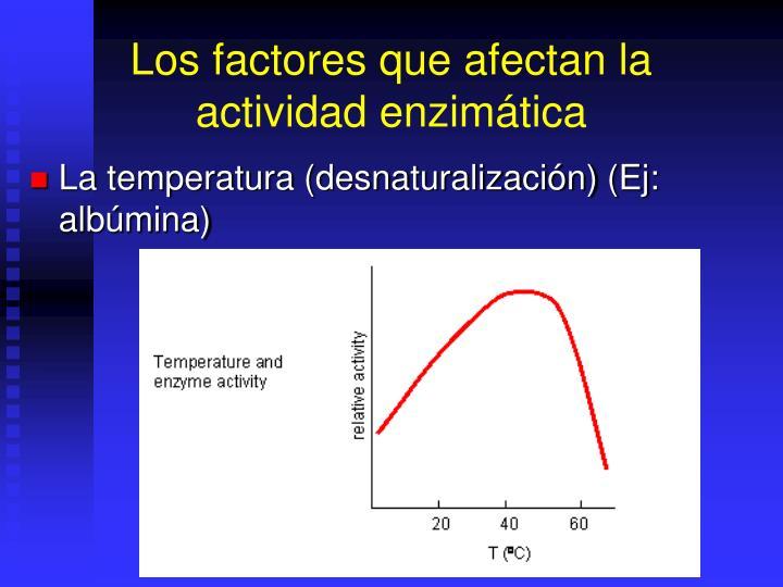 Los factores que afectan la actividad enzimática