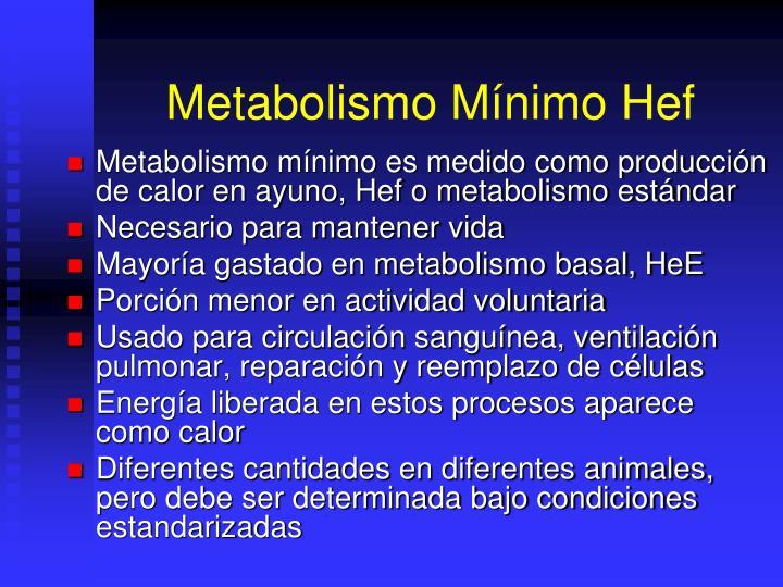 Metabolismo Mínimo Hef