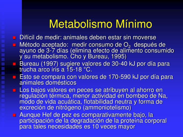 Metabolismo Mínimo
