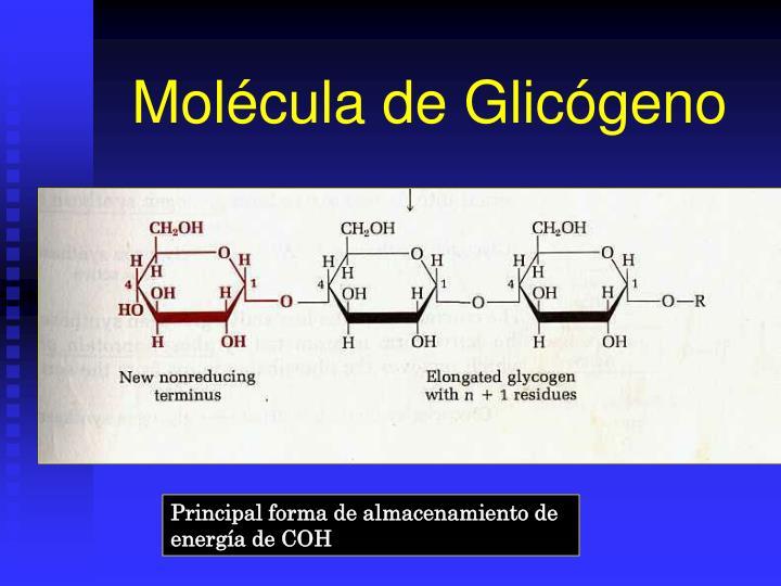 Molécula de Glicógeno