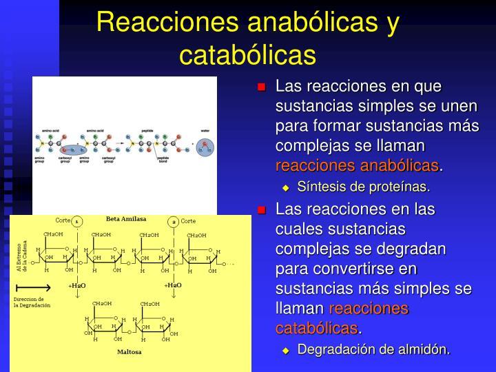 Reacciones anabólicas y catabólicas