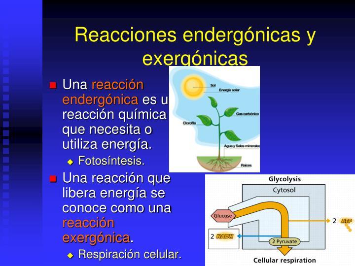 Reacciones endergónicas y exergónicas