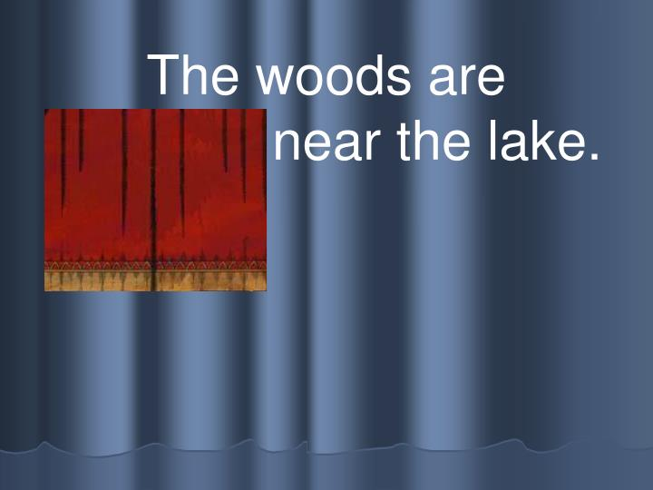 The woods are beautiful near the lake.