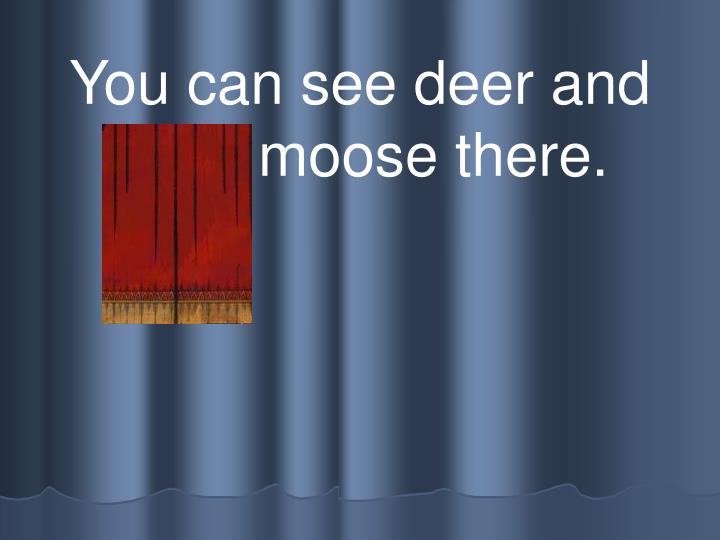 You can see deer and even moose there.