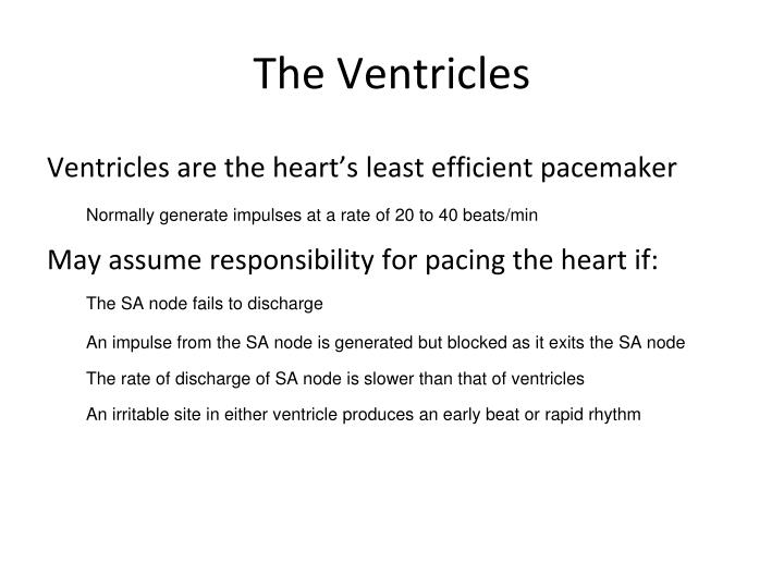 The Ventricles