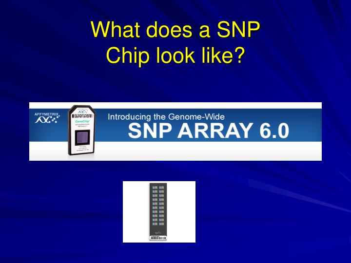 What does a SNP