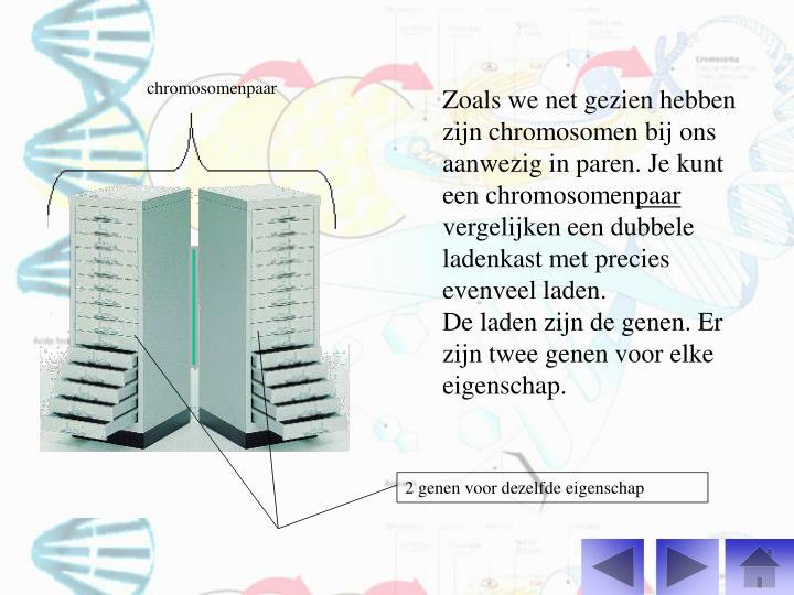 chromosomenpaar