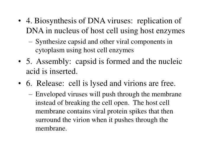 4. Biosynthesis of DNA viruses:  replication of DNA in nucleus of host cell using host enzymes