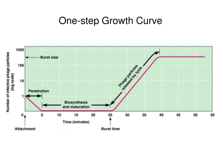 One-step Growth Curve