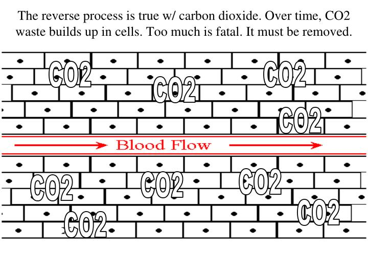 The reverse process is true w/ carbon dioxide. Over time, CO2 waste builds up in cells. Too much is fatal. It must be removed.